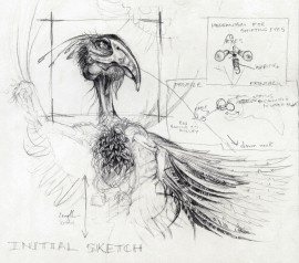 Bird Sketch with Diagrams